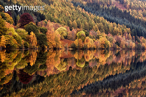 Reflection Of Autumn Trees On Calm Lake - gettyimageskorea