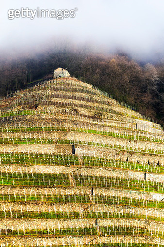 Old hut in the wineyards. Bianzone,  Valtellina, Lombardy, Italy, Europe. - gettyimageskorea