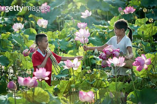 Love on Lotus - gettyimageskorea