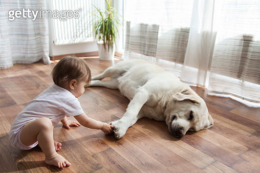 baby girl playing with dog - gettyimageskorea