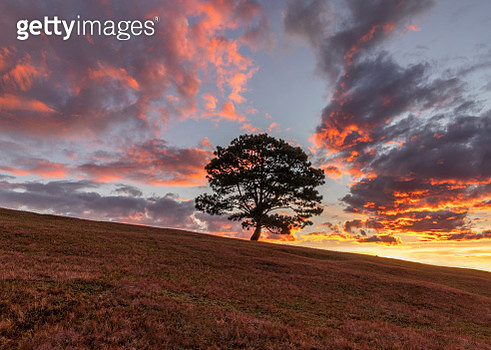 Alone tree in the top of hill - gettyimageskorea
