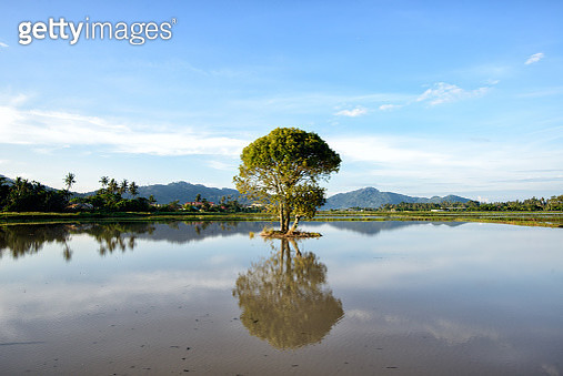 A single tree in the lake with the reflection - gettyimageskorea