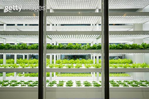vegetable farm - gettyimageskorea