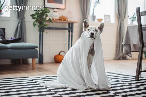 Costumed for Halloween - gettyimageskorea