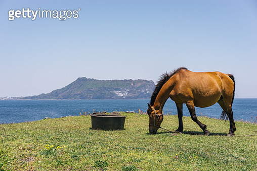 A horse with Sunrise Peak (Seongsan Ilchulbong) on Jeju Island, South Korea - gettyimageskorea