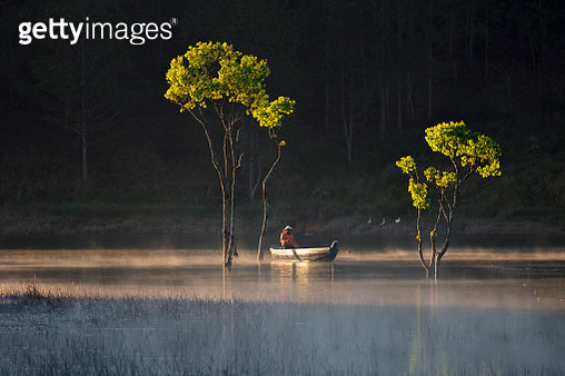 Green tree forest on Misty lake - gettyimageskorea