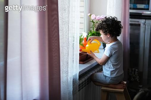 little kid planting seeds in indoor window garden. - gettyimageskorea