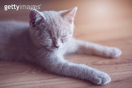 Little cat lying - gettyimageskorea