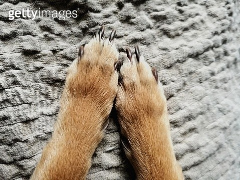 Low Section Of Dog On Fabric - gettyimageskorea
