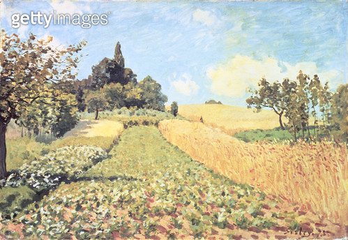 <b>Title</b> : Wheat Field (oil on canvas)<br><b>Medium</b> : <br><b>Location</b> : Private Collection<br> - gettyimageskorea