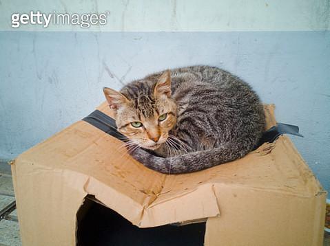 Cat living in a cardboard box on the sidewalk - gettyimageskorea