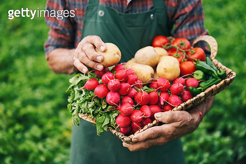 Farmer holding basket with vegetables - gettyimageskorea