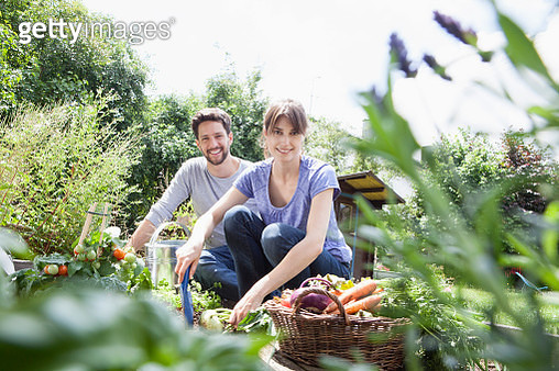 Smiling couple gardening in vegetable patch - gettyimageskorea