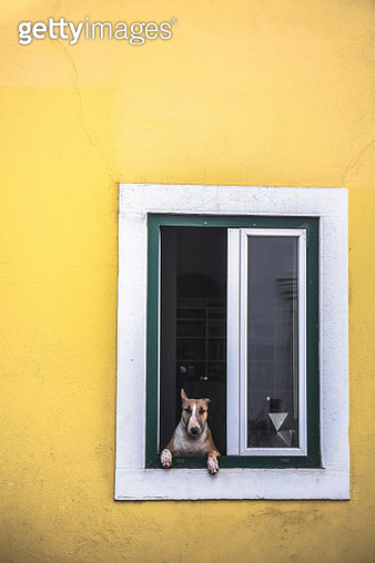 Cute dog looking through local apartment window, Lisbon, Portugal - gettyimageskorea