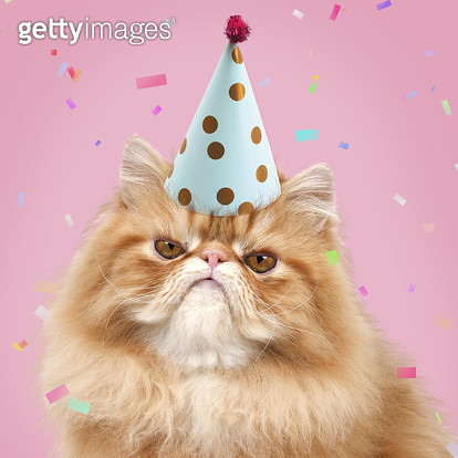 Cat - grumpy Red Persian wearing party hat with confetti birthday Digital Manipulation: tunred grumpy hat PAB colour background - gettyimageskorea