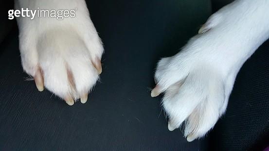 Close-Up Of Dog - gettyimageskorea