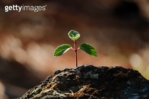Young tree growing in rock - gettyimageskorea