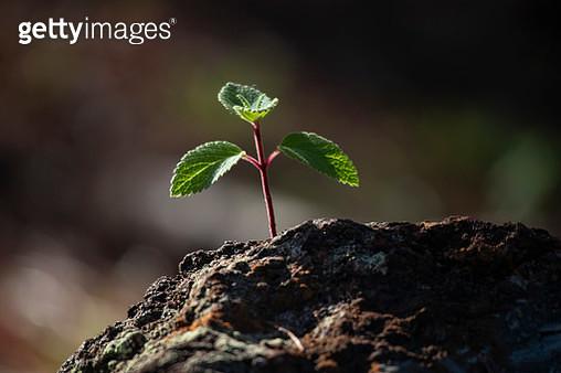 Young tree growing in rock - gettyimageskorea