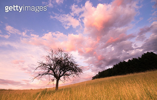 Bare Tree On Field Against Sky During Sunset - gettyimageskorea