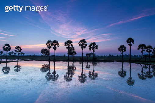 Colorful sunrise landscape with silhouettes of palm trees - gettyimageskorea