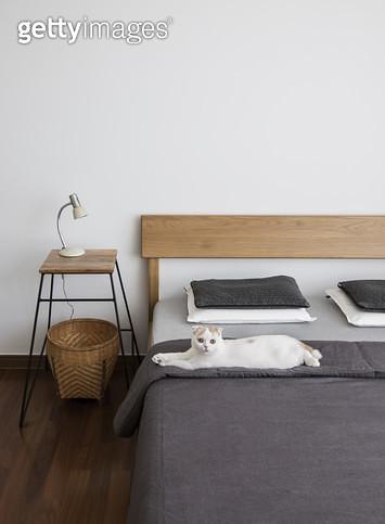 침대위의 고양이 - gettyimageskorea