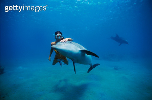 Trainer swimming with dolphin - gettyimageskorea
