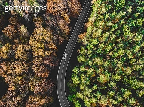Car Moving On Road Amidst Trees - gettyimageskorea