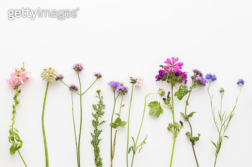 Border with an arrangement in a line of dainty colorful summer flowers with long stems below copy space on a white background - gettyimageskorea