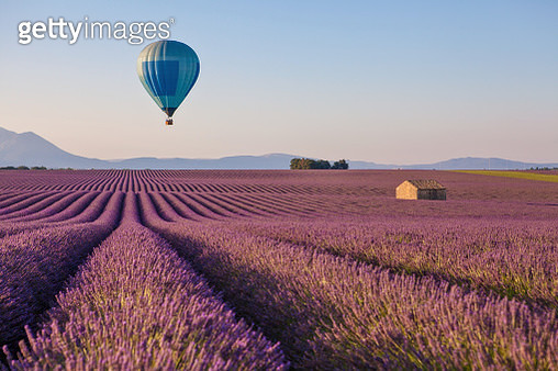 Hot air balloon over lavender field near Valensole in Provence, France - gettyimageskorea