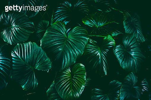 Full Frame Shot Of Palm Trees - gettyimageskorea