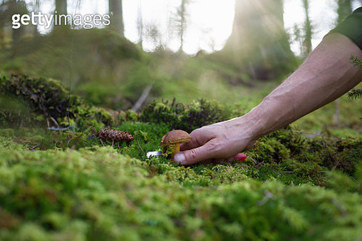 Man harvesting mushroom from mossy forest floor, close-up of hand - gettyimageskorea