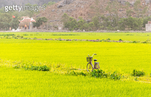 Rustic bicycle with paddy field in the background, Ninh Binh, Vietnam - gettyimageskorea
