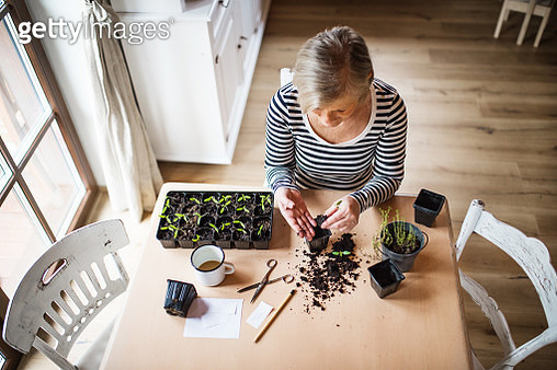 A high angle view of senior woman planting seedlings at home. - gettyimageskorea