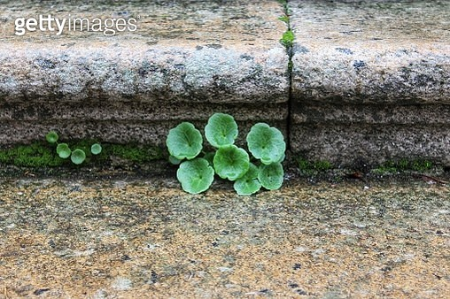 High Angle View Of Plant Growing On Rock - gettyimageskorea