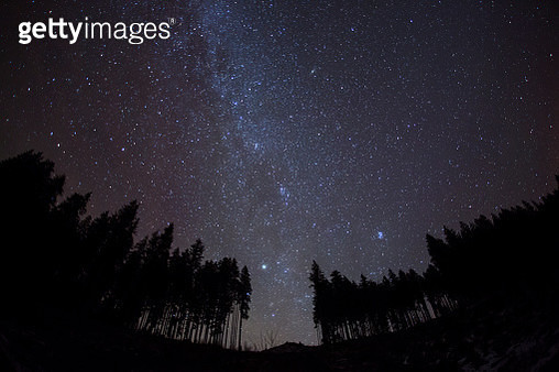 Night sky with stars and trees - gettyimageskorea