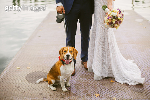 Bride and groom with their dog - gettyimageskorea