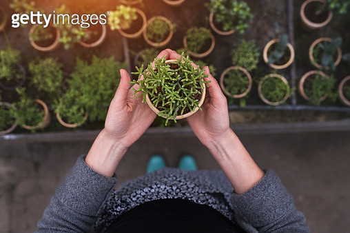 Woman gardener in a large greenhouse holding a pot with plant. - gettyimageskorea