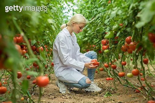 Female scientist in greenhouse - gettyimageskorea