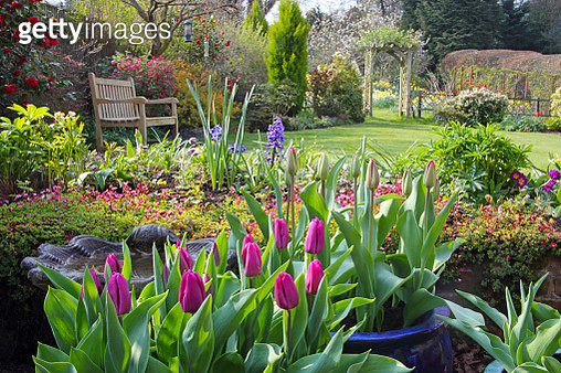 English country garden in spring with pots of tulips on the patio, flowers in the borders, flowering shrubs, a rose arch and a garden seat on the lawn, Haslemere, Surrey, England, UK. - gettyimageskorea