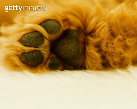 Dog's Paws - gettyimageskorea
