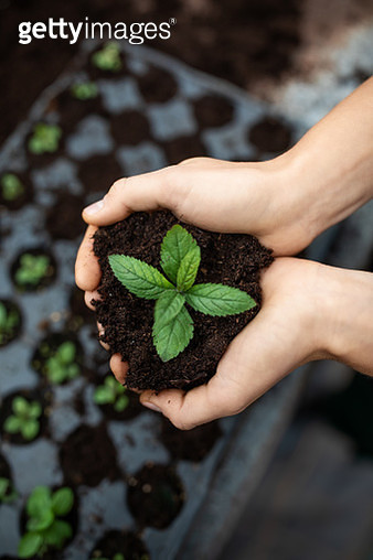 Close-up shot of a female holding a sapling with soil. Close-up of gardener's hands planting a young plant in a plastic tray at garden center. - gettyimageskorea