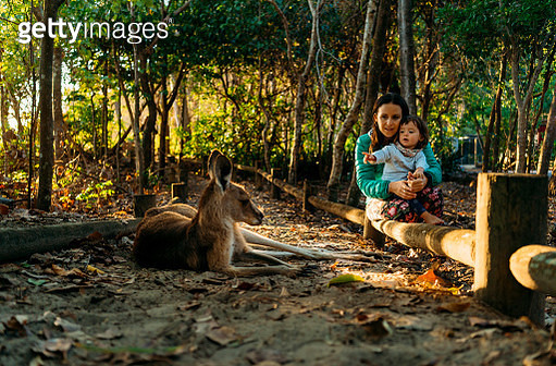 Australia, Queensland, Mackay, Cape Hillsborough National Park, mother and little daughter watching kangaroo - gettyimageskorea
