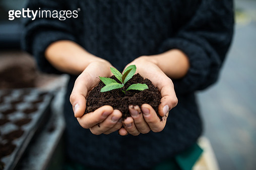 Cropped shot of a female gardener holding a sapling with soil. Close-up of gardener's hands with a young plant at garden center. - gettyimageskorea