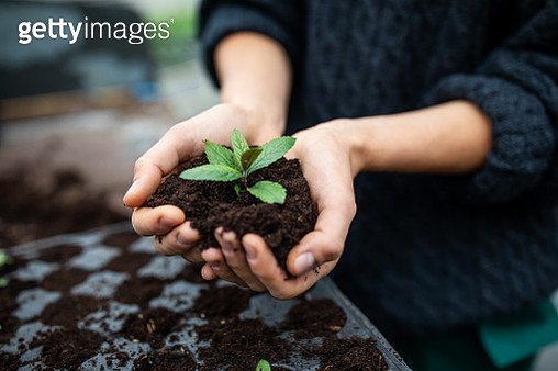 Cropped shot of a woman holding a plant growing out of soil. Close-up of gardener's hands planting a seedling in plastic tray at garden center. - gettyimageskorea