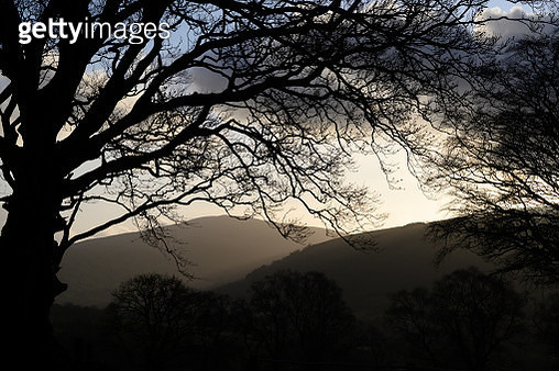 Spooky tree silhouette. Taken in the late autumn light in the Brecon Beacons National Park. The sun setting behind the tree makes the misty atmosphere glow bright. - gettyimageskorea