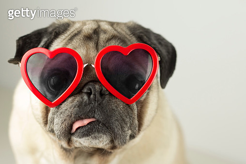 Dog with glasses of red heart - gettyimageskorea