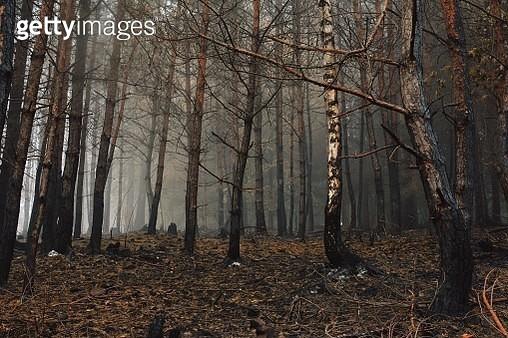 Scorched autumn forest - gettyimageskorea