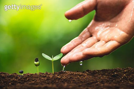 Cropped Hand Watering Seedlings On Field - gettyimageskorea