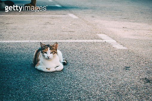 Stray Cat Hiding In A Corner Of The City On A Summer Day - gettyimageskorea