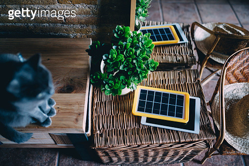 Russian blue cat next to a solar panel charger, tablet and plant - gettyimageskorea